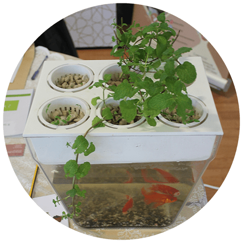 environmental_cercle_Aquaponics-Small-Scale-Installation
